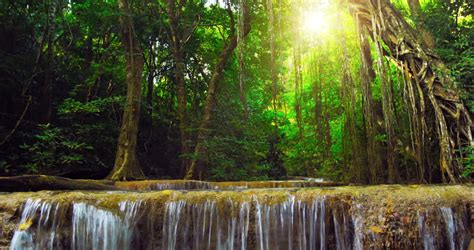 beautiful nature background  exotic stock footage video