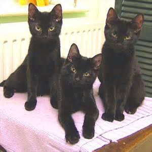 3 black cat 302 found