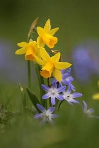 Welche Blumen Blühen Im Mai : die 25 besten ideen zu narzissen auf pinterest ~ Eleganceandgraceweddings.com Haus und Dekorationen