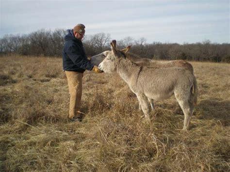 donkeys companions donkey