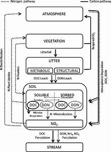 Simple Nitrogen Cycle Diagram