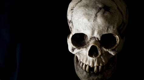 Cool Skeleton Wallpapers 45 Images