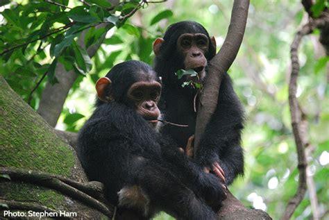 Protecting the Bili-Uele Protected Area in DRC   InfoCongo