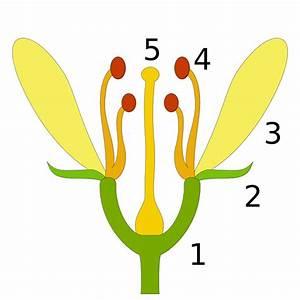 Bau Der Pflanze : aufbau von pflanzen biologie artikel ~ Lizthompson.info Haus und Dekorationen