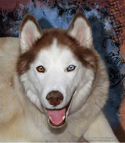 Pet Aquilo Husky Portrait Tripoddogdesign Dog Before