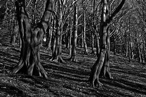 Dark, Fantasy, Forest, Mysterious, Mystery, Scary, Shadow, Spooky, Trees, Woods, 4k, Wallpaper, And