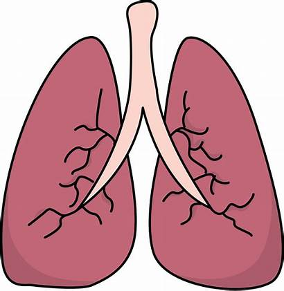 Lungs Lung Clipart Clip Human Transparent Asthma