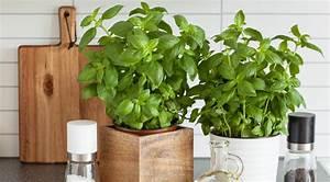 Comment faire pousser ses plantes aromatiques dans sa for Herbes aromatiques faire pousser verveine