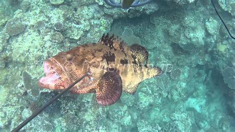 spearfishing japan okinawa grouper brown marbled
