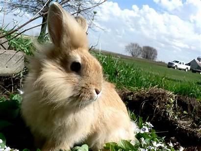 Rabbit Wallpapers Bunny Rabbits Animal Bunnies Animali