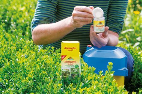 Buchsbaum Raupe Spritzmittel by Wissenswertes 252 Ber Pestizide Allgemein Ratgeber