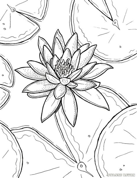 printable water lily coloring page  ryanne levin