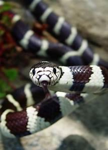 156 best Pet - Snake images on Pinterest | Amphibians ...