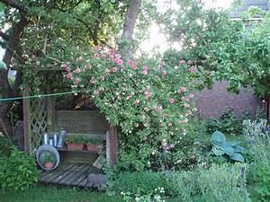 Wie Bekämpfe Ich Schnecken Im Garten : wie starte ich im vernachl ssigten garten page 2 mein sch ner garten forum ~ Markanthonyermac.com Haus und Dekorationen