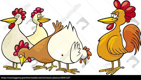 hane og høner stockphoto 4941237 panthermedia