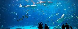 The meaning and symbolism of the word - «Aquarium»