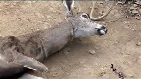 The Deer From Human Giant, Paul Scheer, And