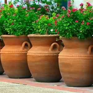 Welche Pflanzen Eignen Sich Als Sichtschutz : sichtschutz pflanzk bel sichtsch tze k nnen auch dekorativ sein ~ Sanjose-hotels-ca.com Haus und Dekorationen