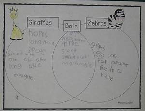 Zoo Venn Diagram Comparing Giraffes And Zebras