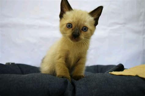 Our story gato x our planet stockists blog. Gato Siames - $ 2,000.00 en Mercado Libre