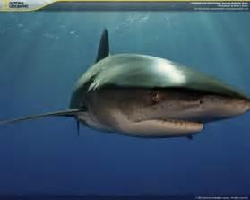 Underwater National Geographic Screensavers