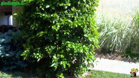come irrigare un giardino come progettare un giardino soleggiato