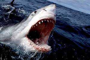 You're Gonna Need a Bigger Boat: Jaws (1975 ...