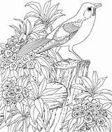 Coloring Adults Printable Adult Birds Bird Colouring Sheets Sheet Printables Detailed Nature Children sketch template