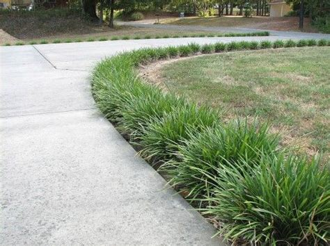 border grasses for landscaping landscaping ideas with monkey grass liriope monkey grass ground cover evergreen mature