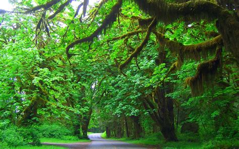 nature landscape washington state olympic national park trees road grass green shrubs