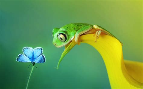 Live Animal Wallpaper For Mobile - animals frog macro wallpapers hd desktop and mobile