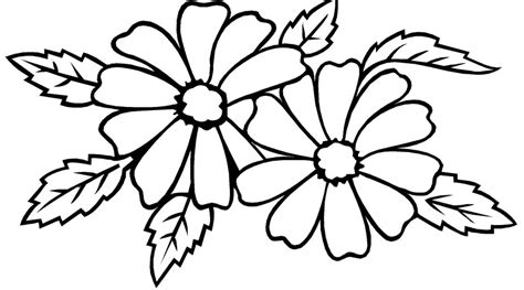 sketsa hitam putih gambar mewarnai bunga melati terbaru
