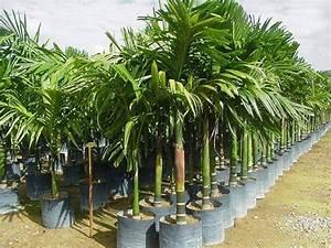 überwintern Von Palmen : palmen ~ Michelbontemps.com Haus und Dekorationen
