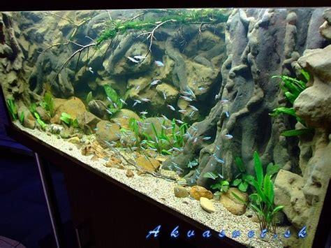 Diy Aquarium Background Best 25 Aquarium Backgrounds Ideas On