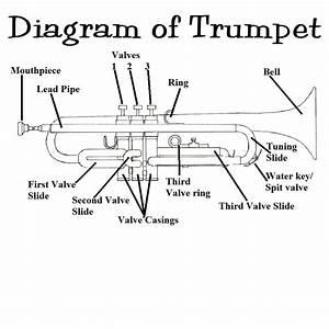 The Trumpet  1