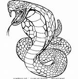 Coloring Cobra King Snake Schlangen Ausmalbilder Printable Poison Spurt Python Ball Angry Disegno Animal Cartonionline Disegni Adults Snakes Serpenti Sheets sketch template