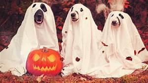 Ideen Für Halloween : 3 kreative deko ideen f r halloween hongi blog ~ Frokenaadalensverden.com Haus und Dekorationen