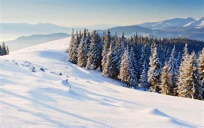 Snow Christmas Tree Background Winter Wallpapers Widescreen