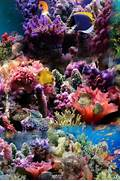 Coral Reef Wallpaper - HD Wallpapers  Coral Reef Wallpaper 1920x1080