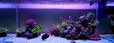 Reef Aquarium Aquascaping by Minimalist Aquascaping Page 3 Reef2reef Saltwater And