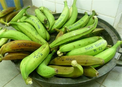 cuisiner des bananes plantain plantain bananas suitability for cooking and nutritional