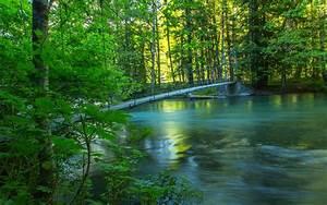 River, forest, bridge, summer, nature scenery wallpaper ...