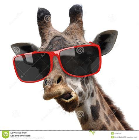 vogue fashion portrait of a giraffe with modern