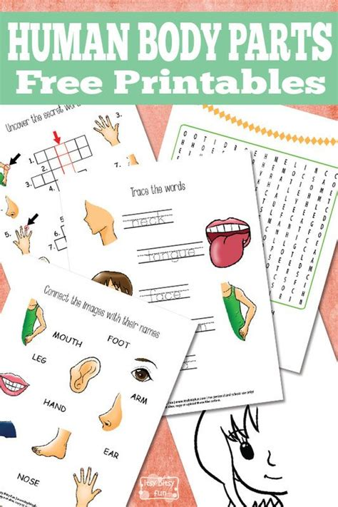 human body parts worksheets for kids homeschool