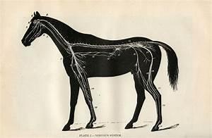 16 Horse Clip Art Images