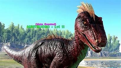 Ark Survival Evolved Wallpapers Raptor