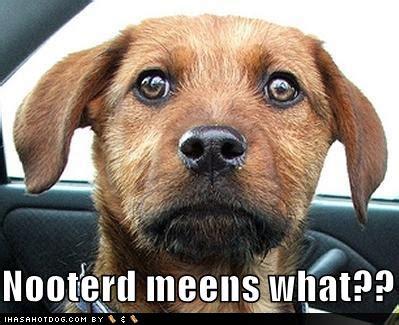spaying  castration neutering dogs doglistener