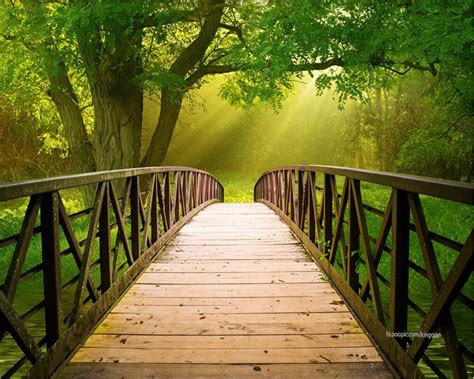 beibehang wooden bridge forest landscape  tv backdrop