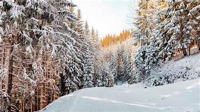Winter Forest Snow Road Landscape Nature Sky