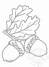 Coloring Autumn Acorn Leaves Acorns Leaf Template Templates Reddit Coloringpage Eu sketch template